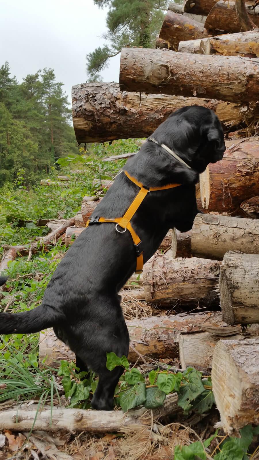 Anton schaut, was da so im Holzstapel wohnt.