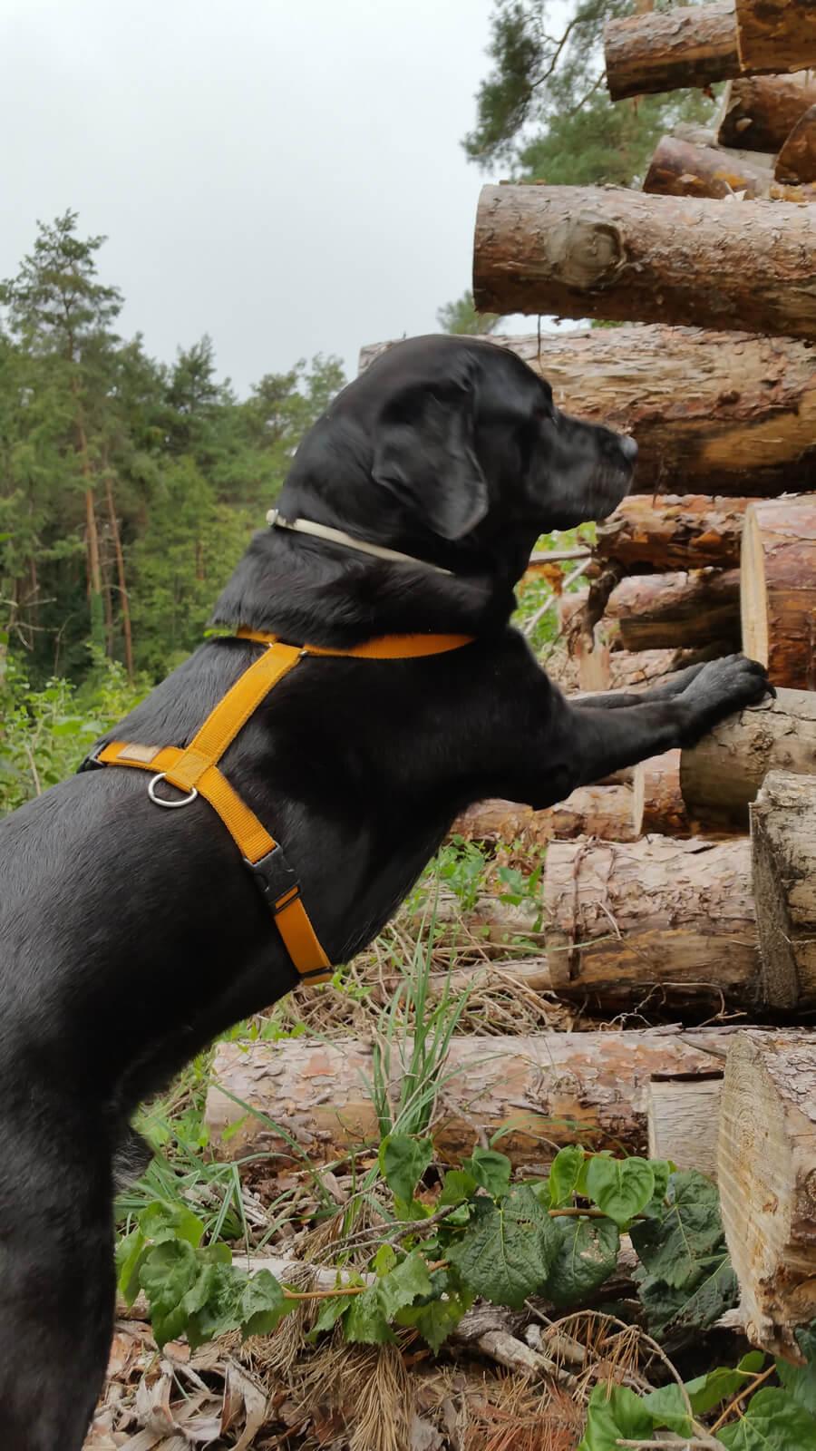 Anton macht Dehnübungen am Holzstapel